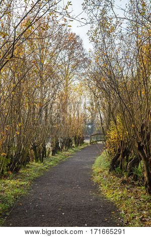 Gravel footpath lined by pollard willows leading towards a pedestrians bridge in a green garden in autumn foliage poster