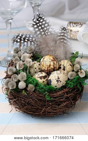 Quail eggs in a nest with green moss pussy-willow branches and feathers on the table for Easter