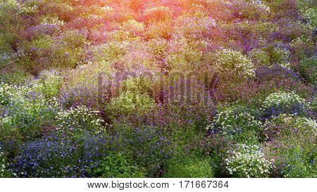 Colored field of wild flowers at sunset. Floral background, toning and effects. Selective focus.