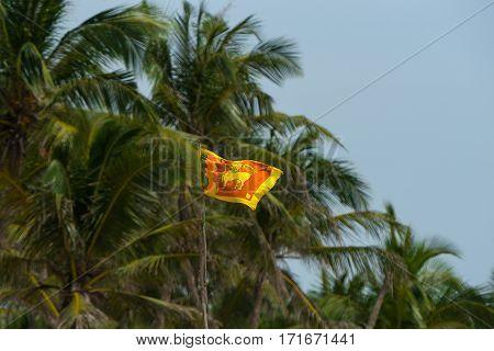Sri Lanka flag on blue sky and palm. Old name Ceylon