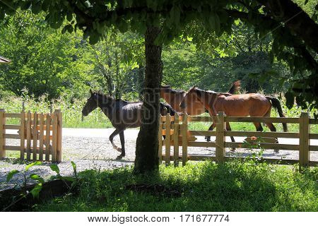 Horses on nature. Horse brown color. running on the road