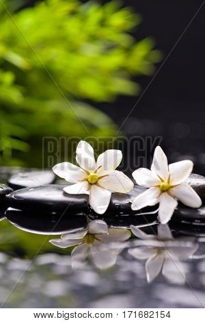 Still life with gardenia and bamboo with therapy stones