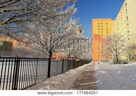 avenue of trees in winter covered with fluffy snow in the town and bright colorful block of flats