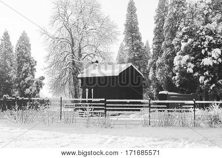 black and white photo of black tomb and tall cedar trees at the old jewish cemetery in winter, Frydek-Mistek, Czech Republic