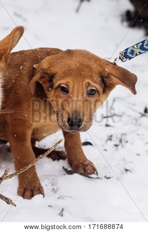 Scared Little Brown Puppy Sitting Alone In Snowy Cold Winter Park. Adoption Concept. Save Animals. S