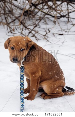Little Puppy Sitting Alone In Snowy Cold Winter Park. Adoption Concept. Save Animals. Space For Text