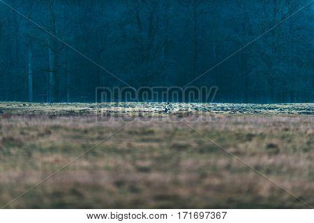 Recreational walking in field near winter forest.