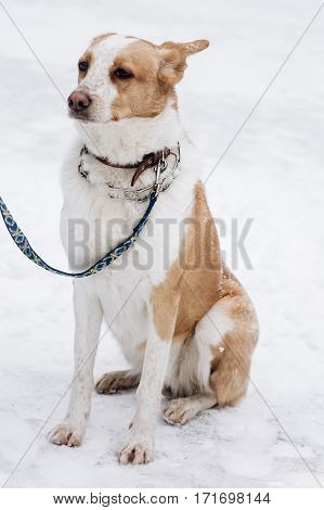 Scared Beige Dog Sitting In Snowy Cold Winter Park. Adoption Concept. Save Animals. Space For Text.