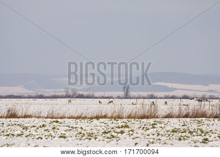photo of a group of deer on snowy field