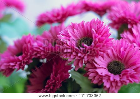 Background of pink artificial Daisy Flowers for decoration