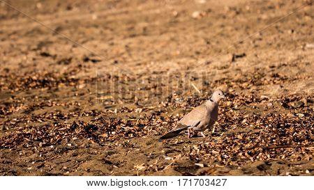One small bird on a beach sand