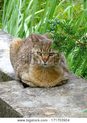 Photo of a tabby cat lying on a concrete wall