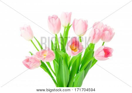 Beautiful Pink tulips flowers in vase isolated on white background. 8 march, Mother's Day concept. Small DOF.