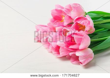 Beautiful Pink tulips flowers on white background. 8 march Mother's Day concept. Small DOF.