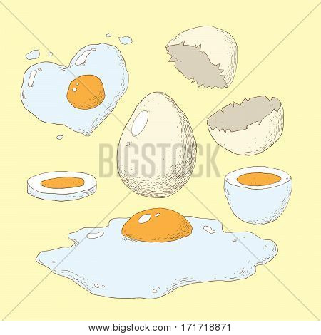 Fried boiled and raw eggs vector illustration