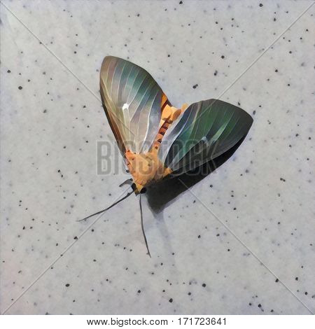 Moth on marble table view from above. Digital illustration in painting style of tropical insect with mosaic wings. Background with butterfly. Flying animal. Summer flat lay. Exotic yellow moth