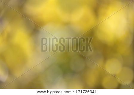 Soft Focus Yellow Floral Background 2