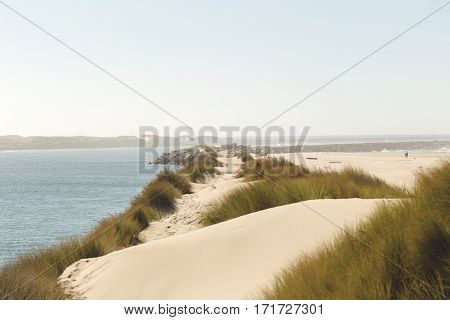 Empty sand trail in along the ocean. Sandy beach trail with grass nearby. Sunny blue sky.