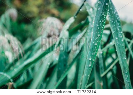 Water droplets shot with shallow depth of field at morning in Plitvice, Croatia