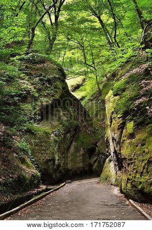 Path through rocks in summer wild forest