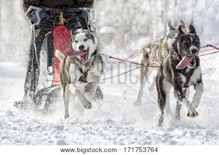 Front view of sled dogs with musher running in a snow covered landscape.