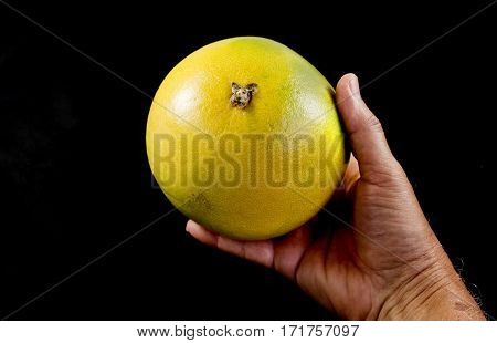 Hand holding a pale green pomelo citrus maxima over a black background