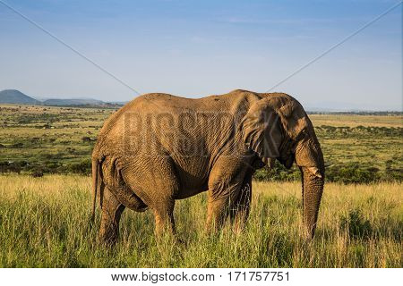Elephant at a game reserve in South Africa