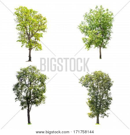 Collection of trees isolated on white background with clipping path.