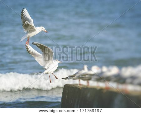 Group of seagulls on the beautiful sea
