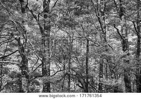 Tropical Rainforest Landscape, Malaysia, Asia. Black and White photo