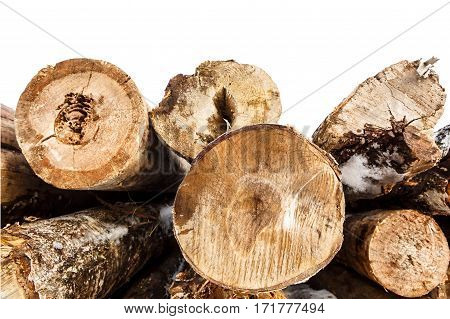 Felled trunks snow of trees stacked isolated on white background. Stacks of sawn woods.  Industrial logging of pine trees. Nature is used by people.