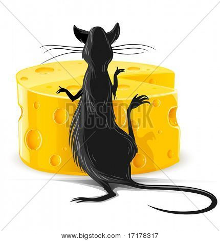black rat eating yellow cheese isolated on white vector illustration