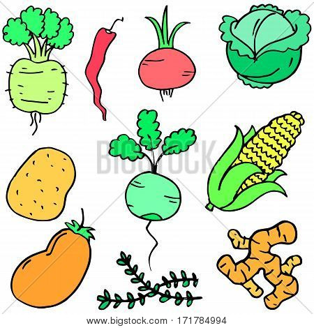 Collection stock of vegetable set cartoon vector art