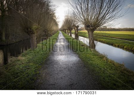 Willows flanking this road after a hard rain sun warms the earth again