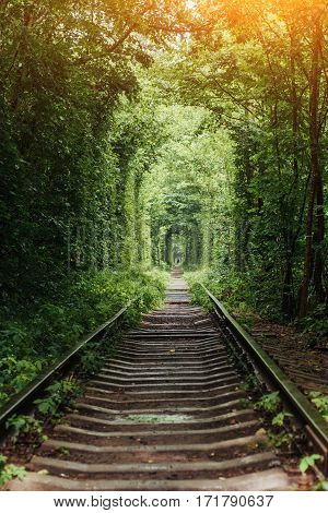 natural tunnel of love emerging from the trees along the railway in Ukraine