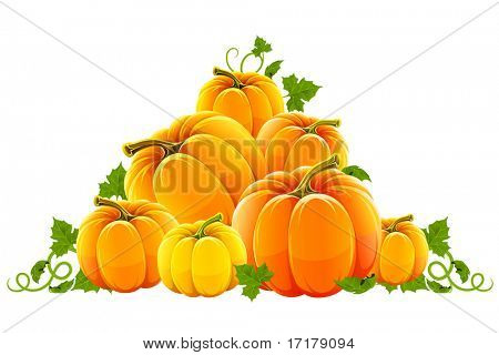 hill harvest of orange ripe pumpkins
