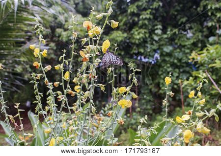 meadow flowers and butterfly on flower in Thailand