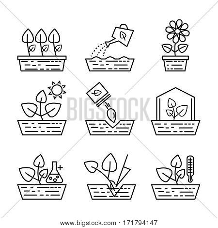 Plant growing line icons. Vector greenhouse planting and seedling outline signs. Gardening and growth flower in linear style icons illustration