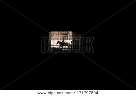 Riding school with doors open lit up at night. A girl on horseback has a riding lesson indoors contrasting with darkness surrounding building