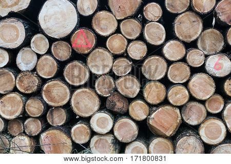 pile of small freshly cut trunks of spruce tree wood