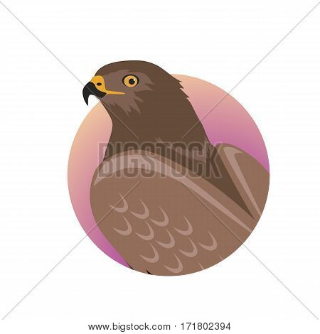 Hawk vector. Predatory birds wildlife concept in flat style design. World fauna illustration for prints, posters, childrens books illustrating. Beautiful hawk seating isolated on white.