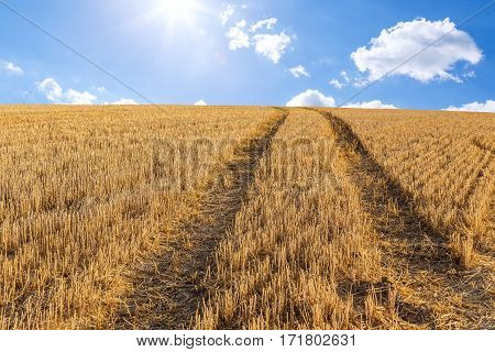 Big Yellow Field After Harvesting
