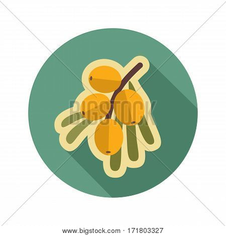 Branch of sea buckthorn berries flat icon. Berry fruit. Vector illustration eps 10