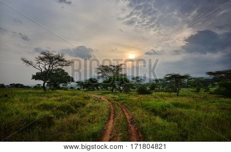 Beautiful landscape with acacia trees in african natural park at sunset