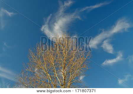 The branches of the tree contrasted against the blue sky.