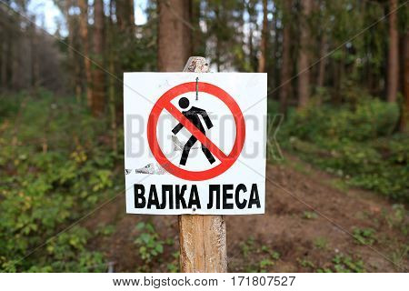 Warning sign tree felling nailed to tree in forest. Moscow region, Russia