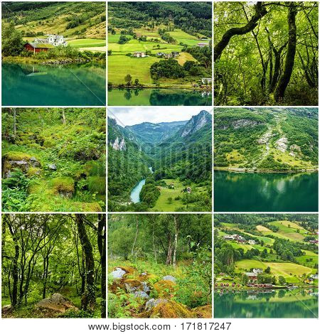 Collage green natural summer landscapes, Norway nature.