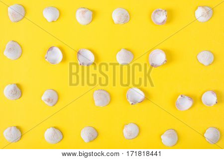 pattern of seashell on colorful background Sea flat lay tropical and aloha concept.