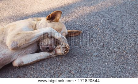 The dog is sleeping on cement background The dog is sleeping on the road. The dog is shy.