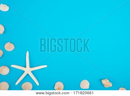 frame of seashell with copy space on colorful background Sea flat lay tropical and aloha travel concept.
